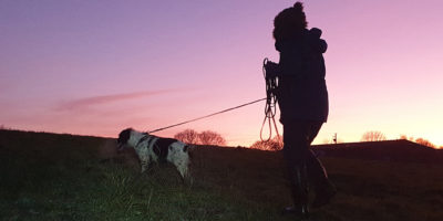 Pettrailer UK Spanial Sunset