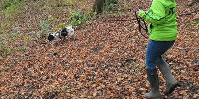 Pettrailer UK Spanial Woods