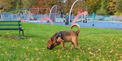 Pettrailer UK Bloodhound Playground