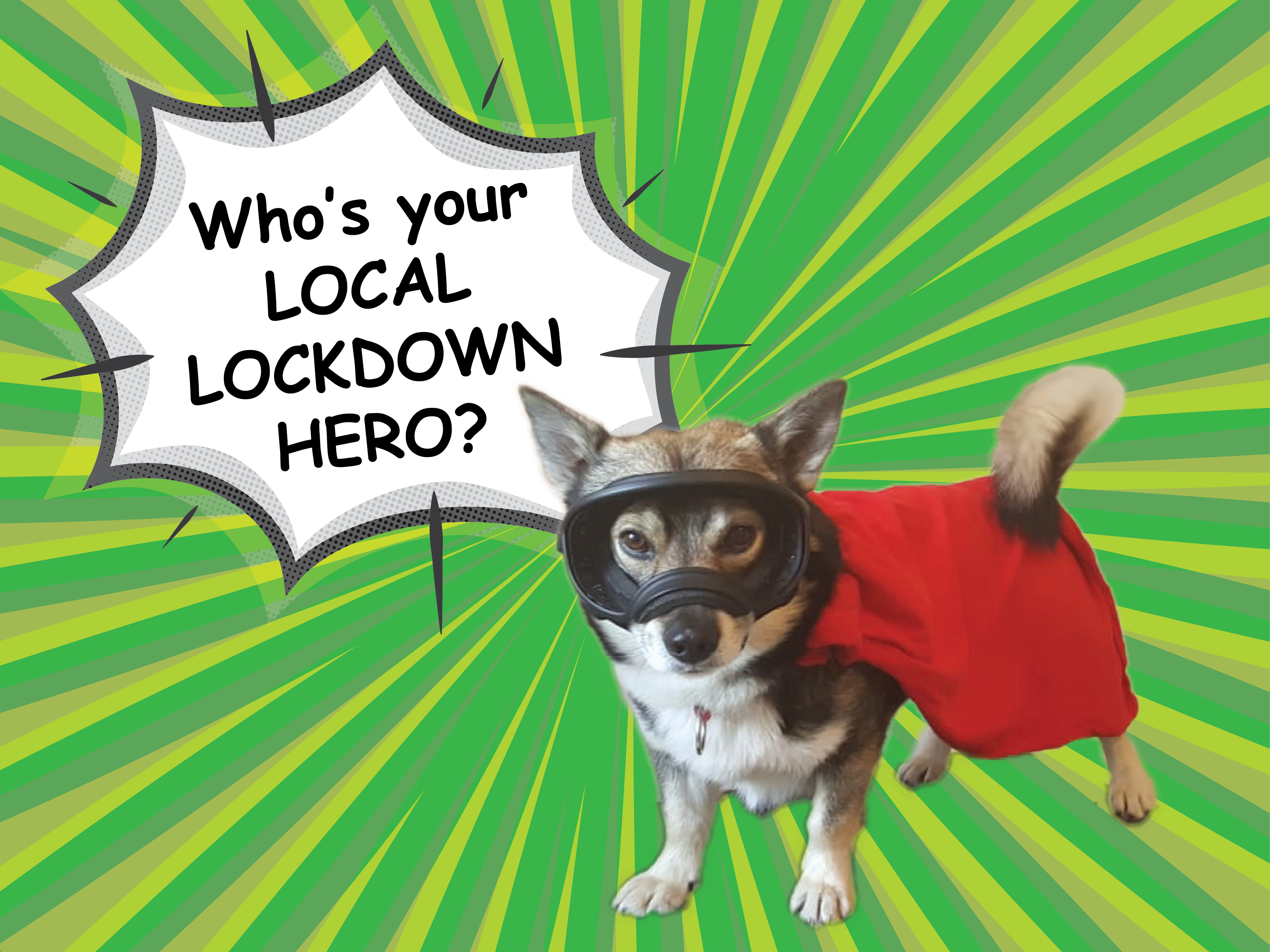 Pettrailer UK Lockdown Hero Promotion
