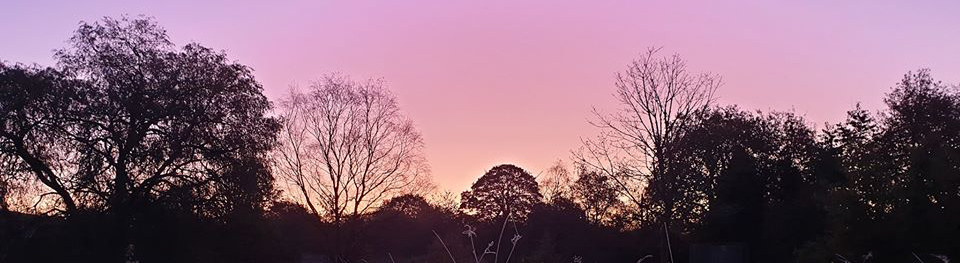 Pettrailer UK Sunrise treeline